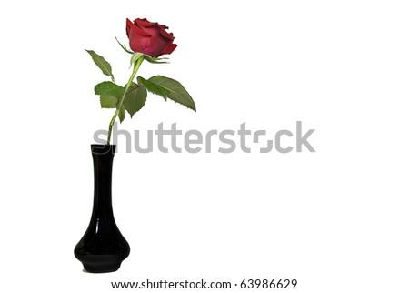 red rose in black vase on white - stock photo