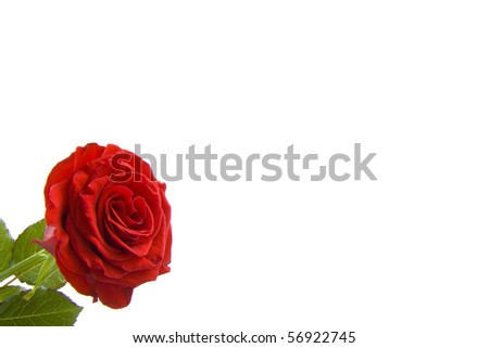 Red rose in the corner and space for text