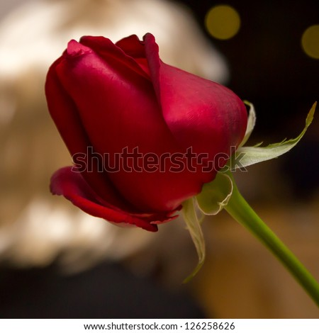 Red rose in the night with golden background