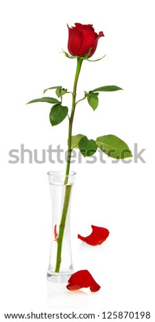 Red rose in vase and two petals isolated on white