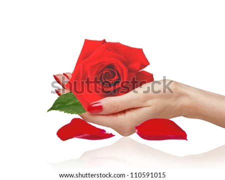 Red rose in woman hand and petals isolated on white background
