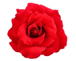 red rose isolate on white background