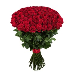 Red rose. Isolated large bouquet of 101 red rose on white.