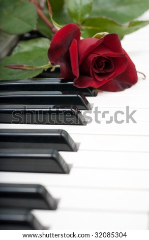 Red rose lies on the piano keyboard