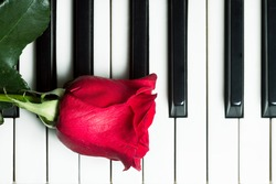 Red rose lying on piano keyboard. Abstract music background. Top view image