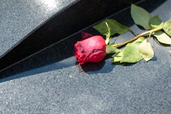 Red rose on a grave.