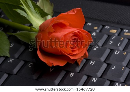 red rose on a notebook computer keyboard