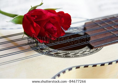Red rose on a South American Music instrument Charango