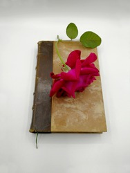 Red rose on a very old book in white background. Concept of nostalgic mood, romantic literature and poetry. Selective focus
