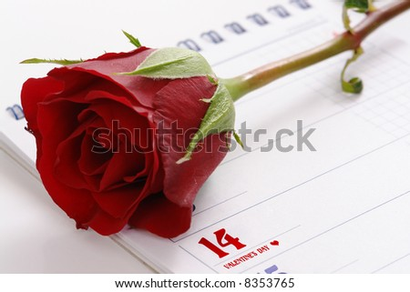 Red rose on calendar page indicating 14 of February - Valentine's day