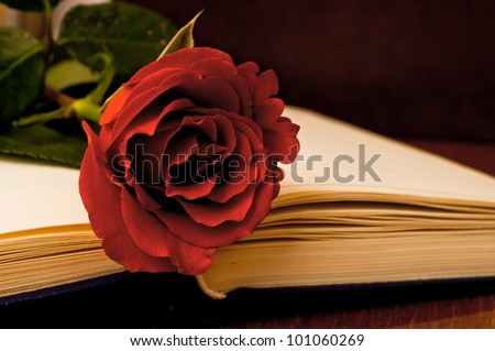 Red rose on the open book in the dark