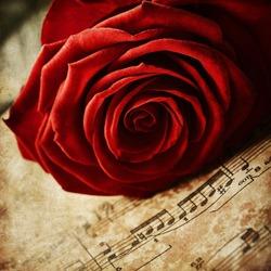Red rose on vintage music sheets