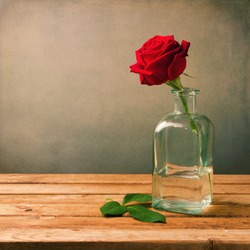 Red rose on wooden table