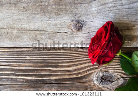 Red rose over wooden background
