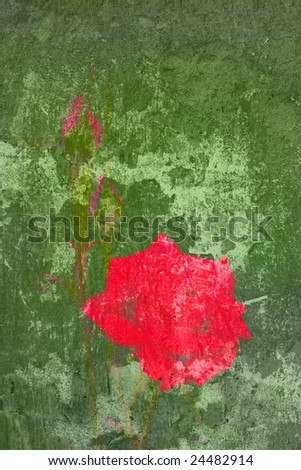 Red rose painted on an old faded green wall