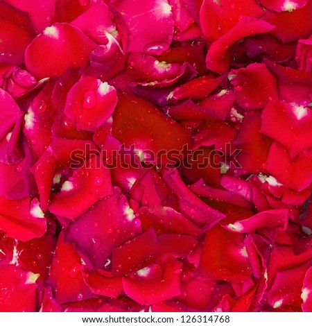 Red rose petal and water drop for background