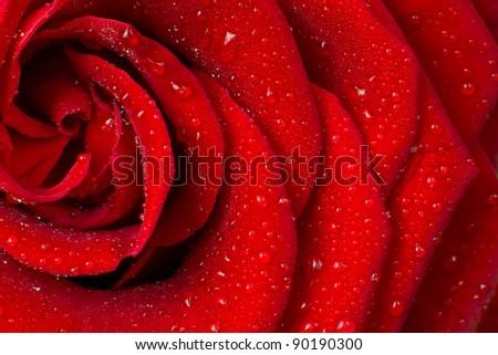 Stock Photo red rose petals