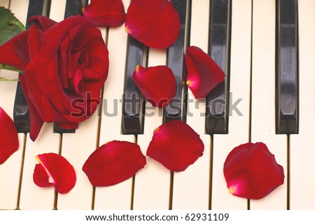 red rose, petals, black and white piano keys
