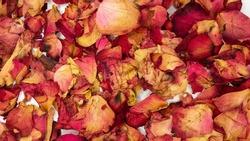 red rose petals close up