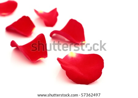 red rose petals close up on a white background