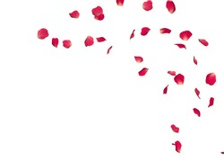Red rose petals fly in a circle. The center free space for Your photos or text