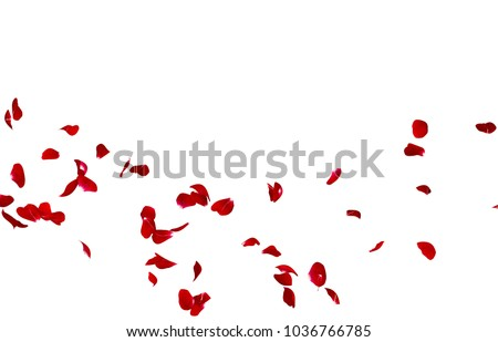Red rose petals fly in a circle. The center free space for Your photos or text. Isolated white background #1036766785