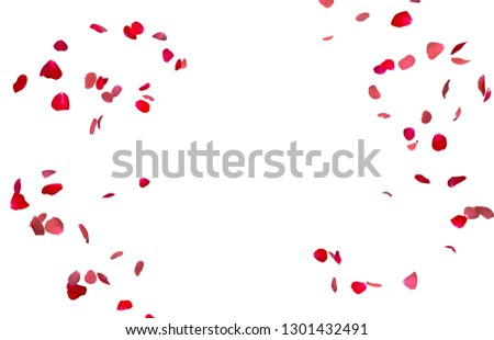 Red rose petals fly in a circle. The center free space for Your photos or text. Isolated white background #1301432491