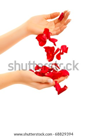 Red rose petals in woman's hand isolated on white