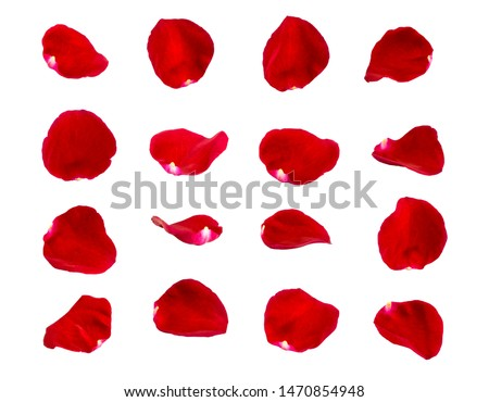red rose petals isolated on white background #1470854948
