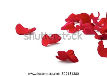Red rose petals isolated on white background #529151380