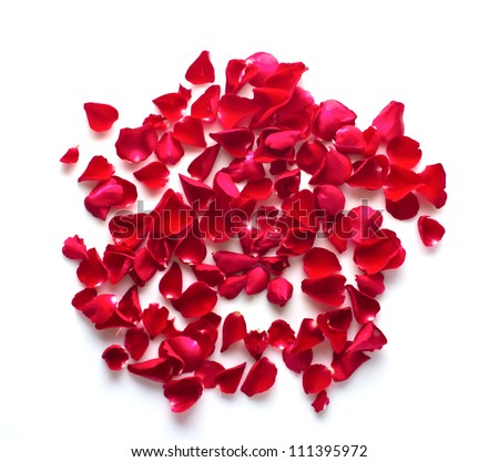 red rose petals on white background
