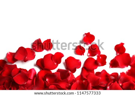 Red rose petals on white background, top view #1147577333