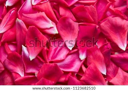 Red rose petals. Rose petals background #1123682510