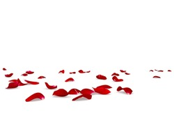 Red rose petals scattered on the floor. Isolated white background