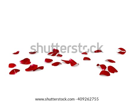 Red rose petals scattered on the floor. White isolated background #409262755