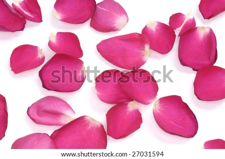 Red rose petals scattered on white background