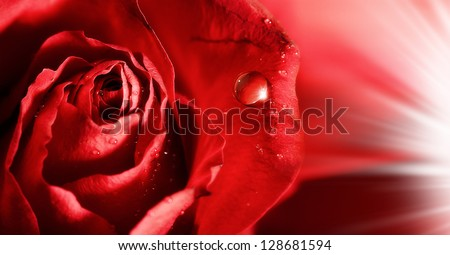 red rose petals  with water droplets and rays of light. abstract backgrounds