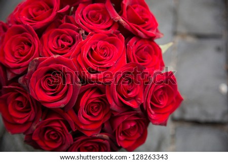 Red Rose/Red Roses