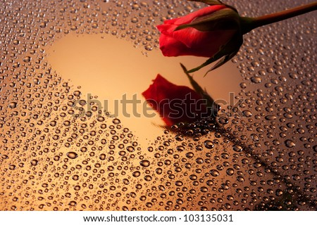 Red rose touching heart shaped reflection on water drops surface