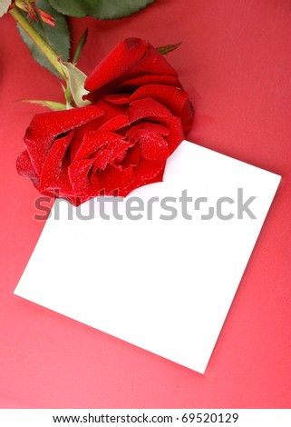 Red rose with empty card on red background.