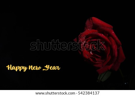 red rose with happy new year