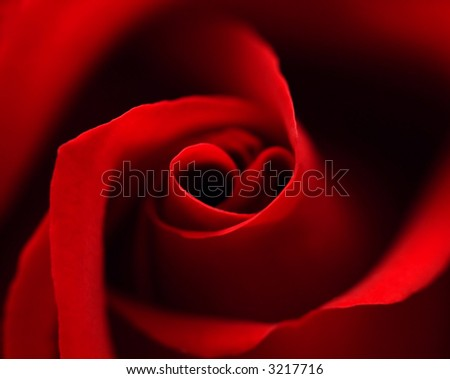 Red rose with heart symbol in center. close-up #1