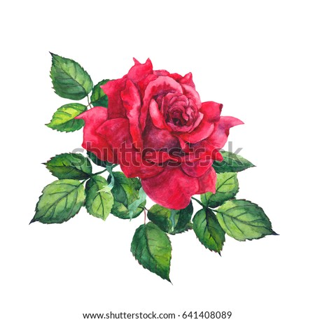 Stock Photo Red rose with leaves. Watercolor for wedding, save date card