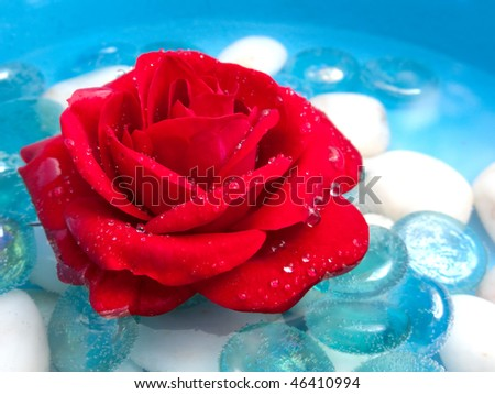 Red Rose with Morning Dew