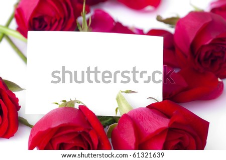 Red rose with petals and blank gift card for text