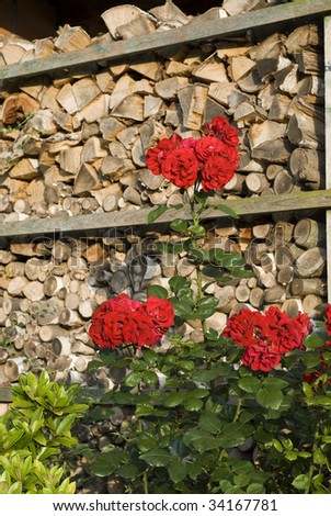 red roses and firewood