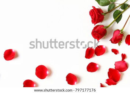 Red roses and rose petals isolated on white.