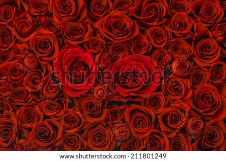 Red roses background, High Angle View