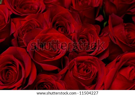 Red roses background, low DOF