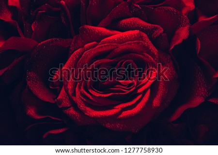Red roses bouquet in a close-up. Floral decoration, Valentine's Day. Symbol of love and romance.